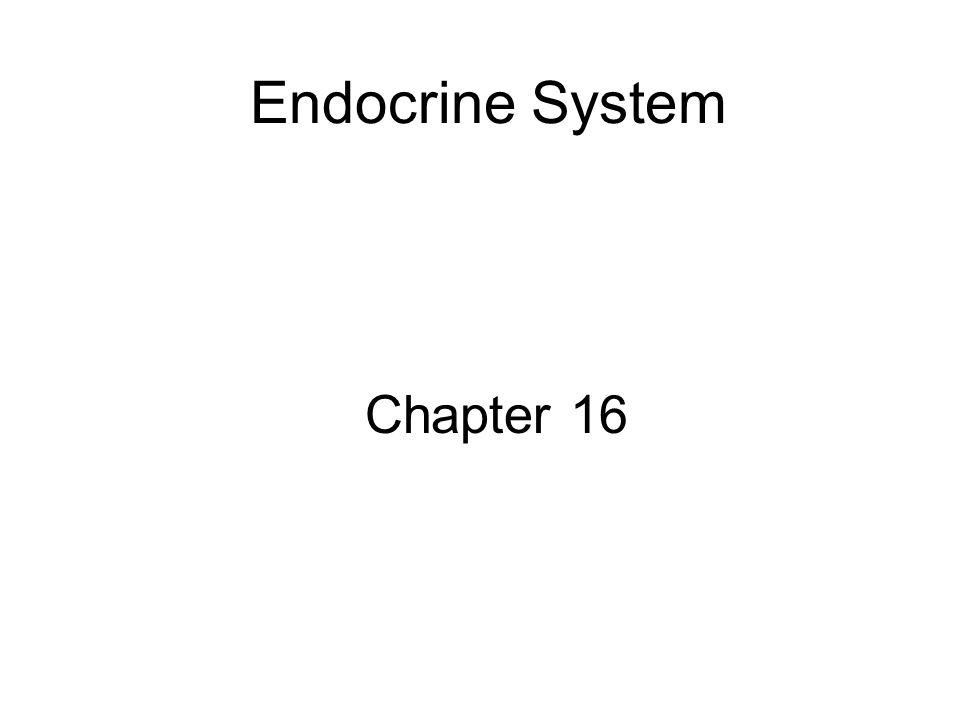 Endocrine System Chapter 16