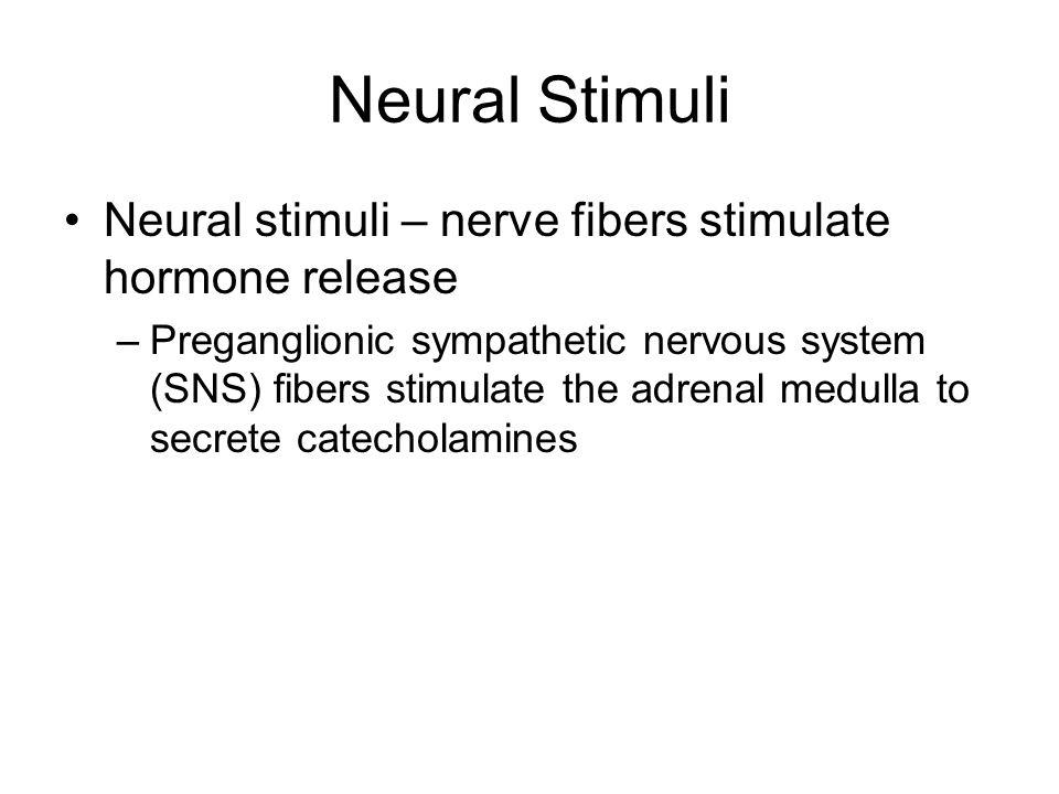 Neural Stimuli Neural stimuli – nerve fibers stimulate hormone release