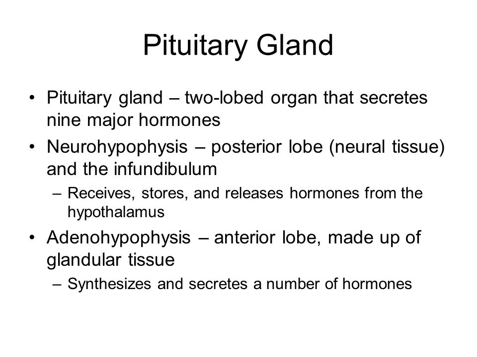 Pituitary Gland Pituitary gland – two-lobed organ that secretes nine major hormones.