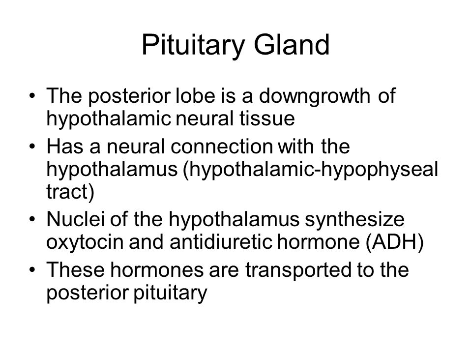 Pituitary Gland The posterior lobe is a downgrowth of hypothalamic neural tissue.
