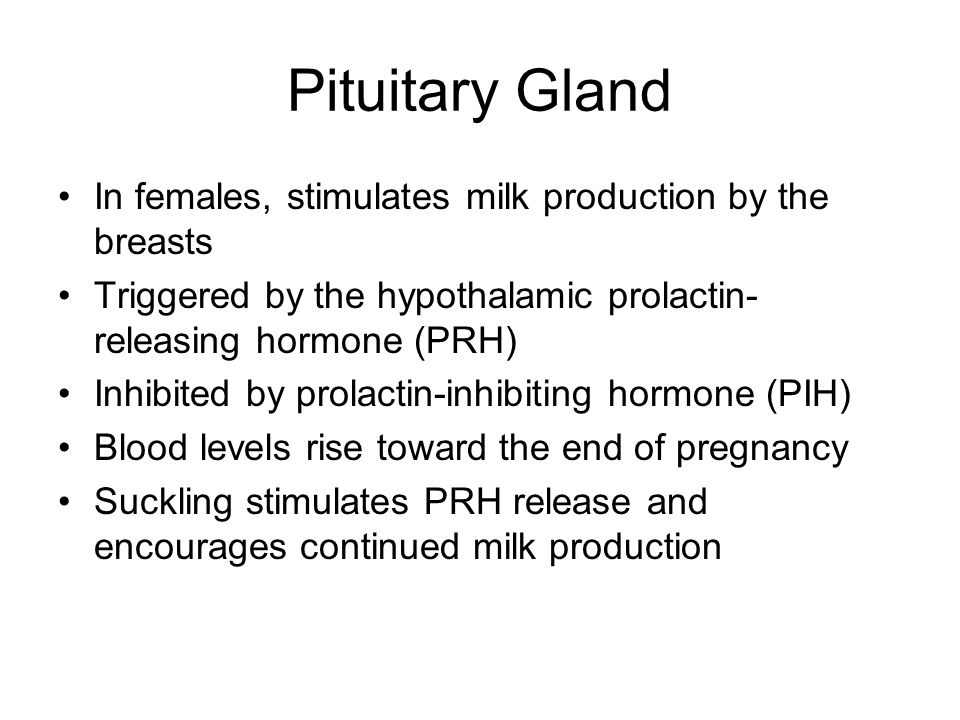 Pituitary Gland In females, stimulates milk production by the breasts