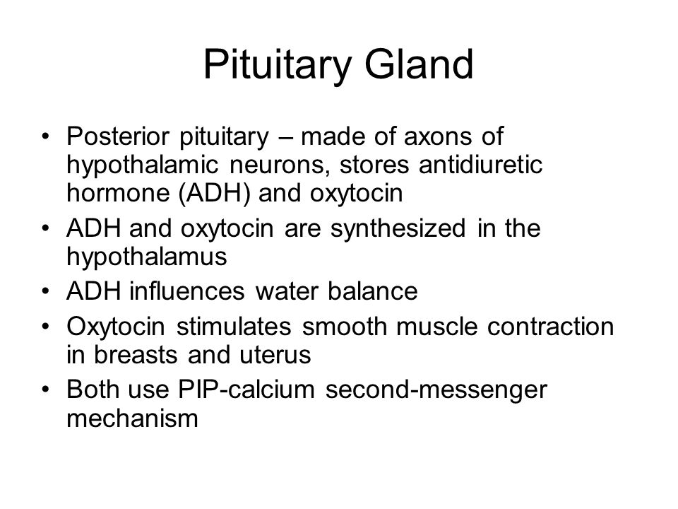 Pituitary Gland Posterior pituitary – made of axons of hypothalamic neurons, stores antidiuretic hormone (ADH) and oxytocin.