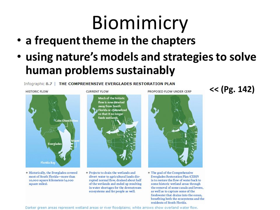 Biomimicry a frequent theme in the chapters