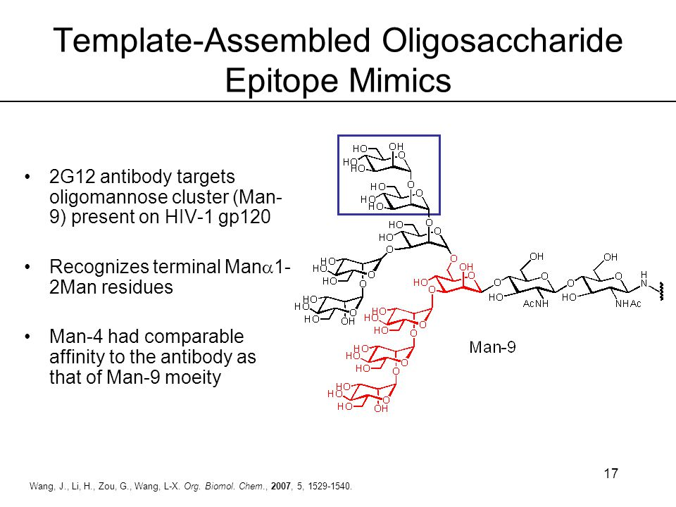Template-Assembled Oligosaccharide Epitope Mimics