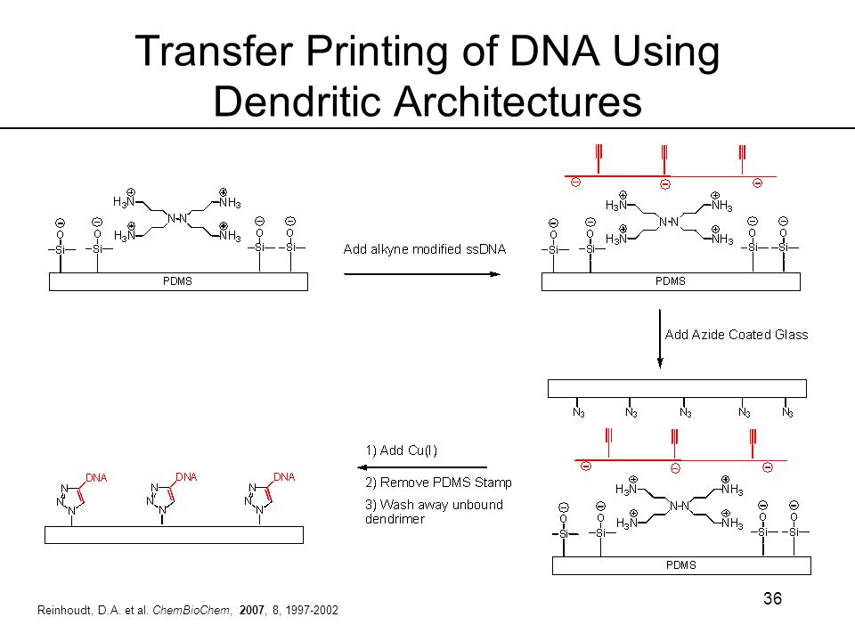 Transfer Printing of DNA Using Dendritic Architectures