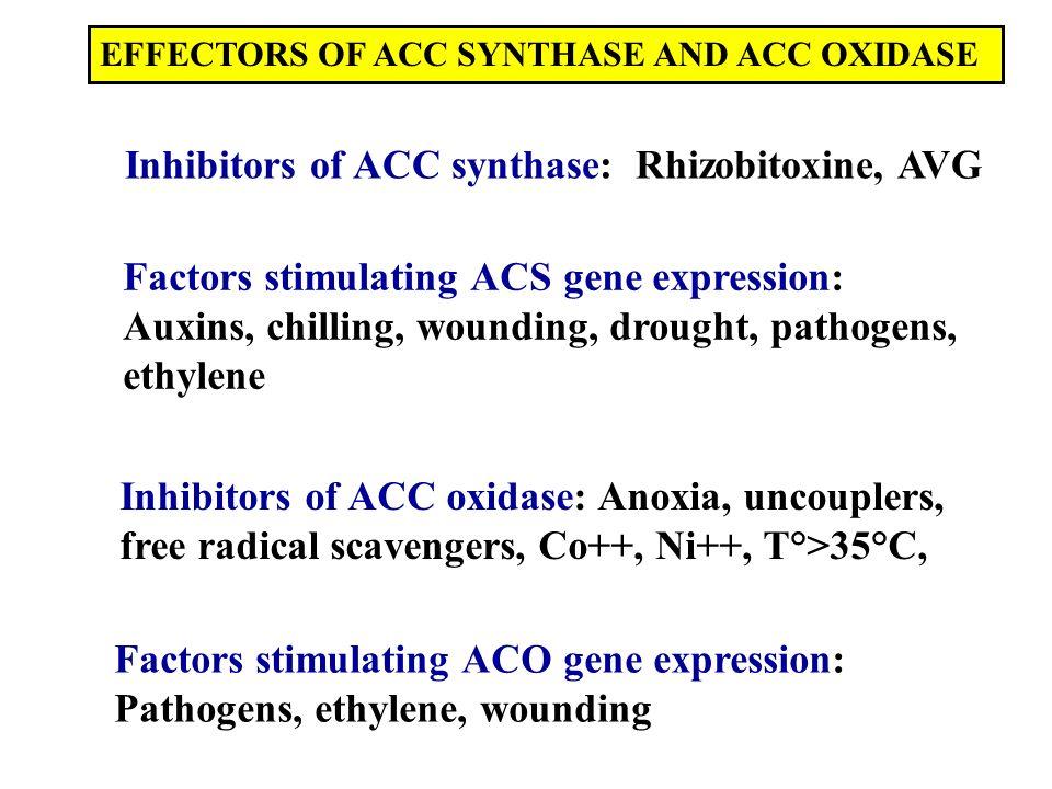 Inhibitors of ACC synthase: Rhizobitoxine, AVG