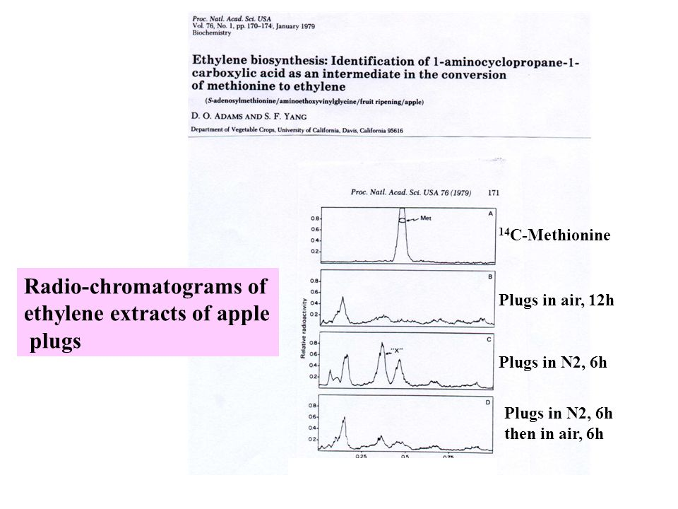 Radio-chromatograms of ethylene extracts of apple plugs