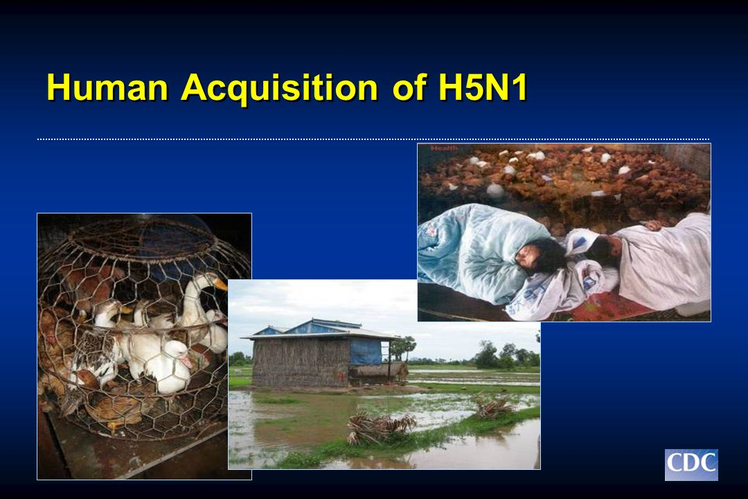 Human Acquisition of H5N1