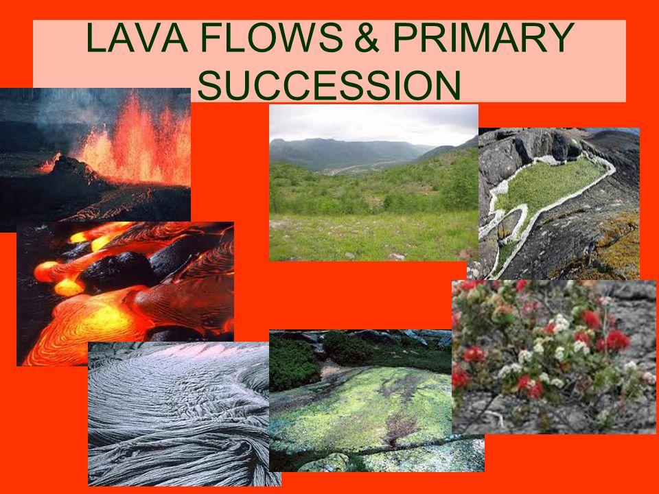 LAVA FLOWS & PRIMARY SUCCESSION