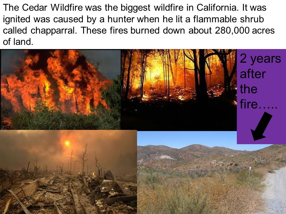 The Cedar Wildfire was the biggest wildfire in California