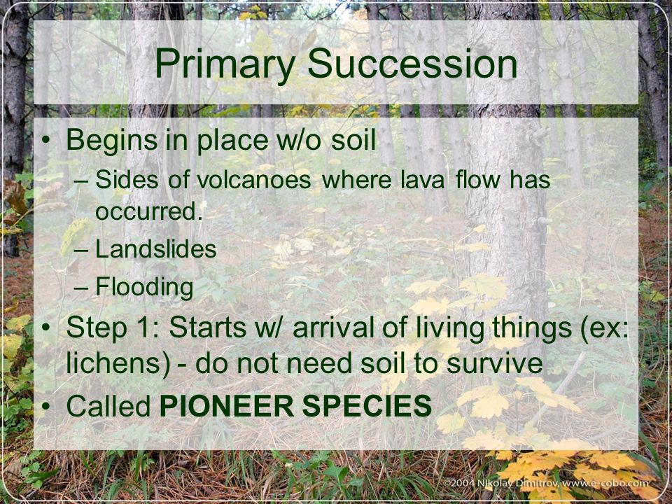 Primary Succession Begins in place w/o soil