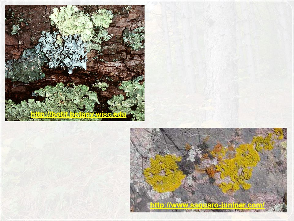 http://botit.botany.wisc.edu http://www.saguaro-juniper.com/