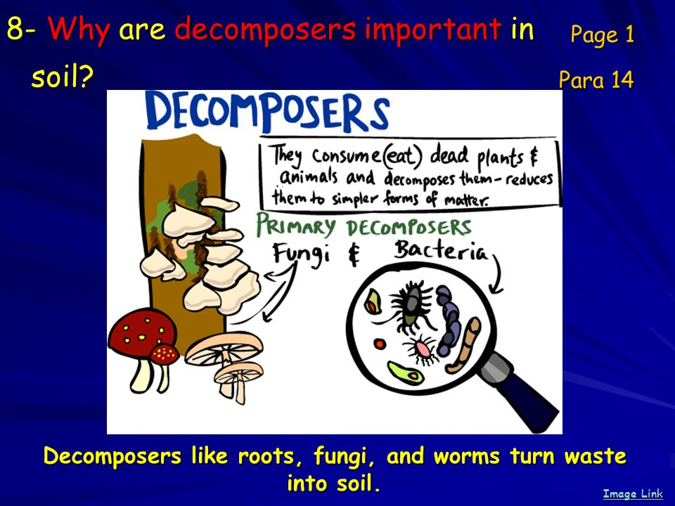 8- Why are decomposers important in soil