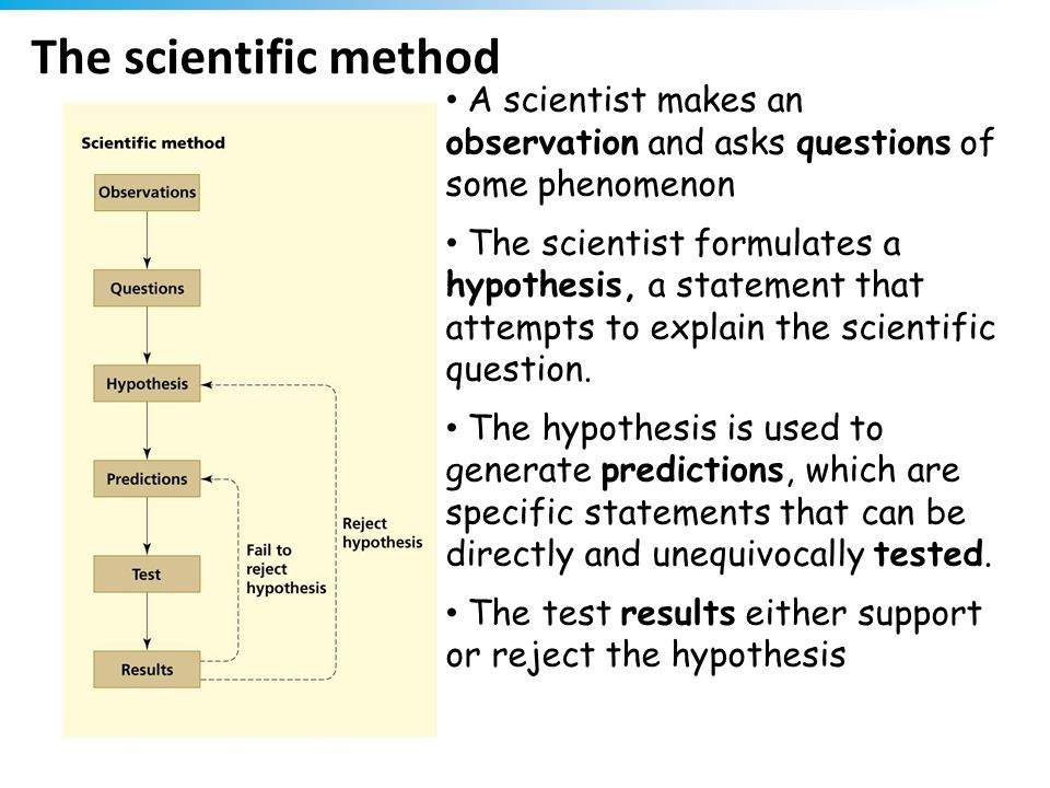 The scientific method A scientist makes an observation and asks questions of some phenomenon.