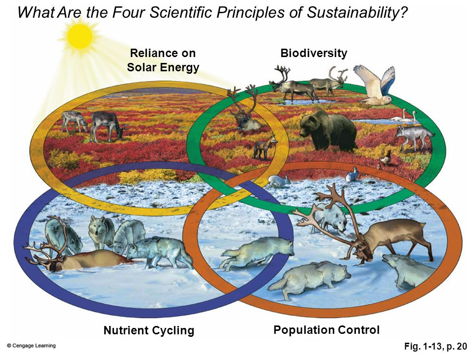 What Are the Four Scientific Principles of Sustainability