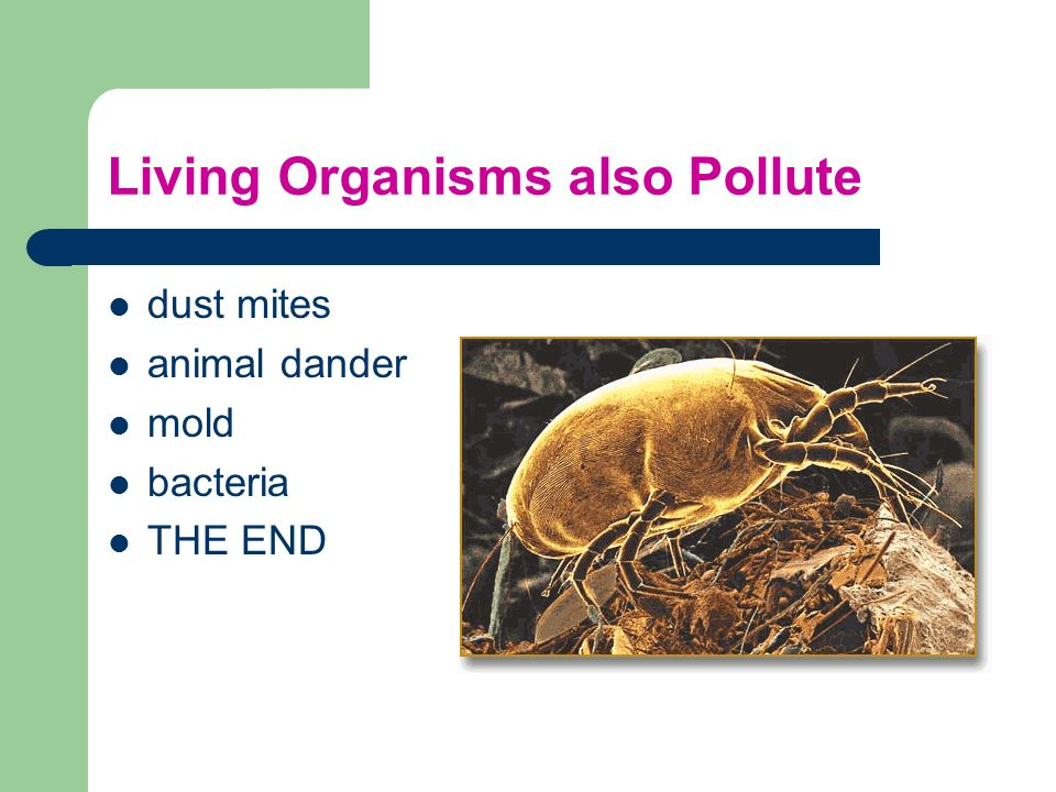 Living Organisms also Pollute