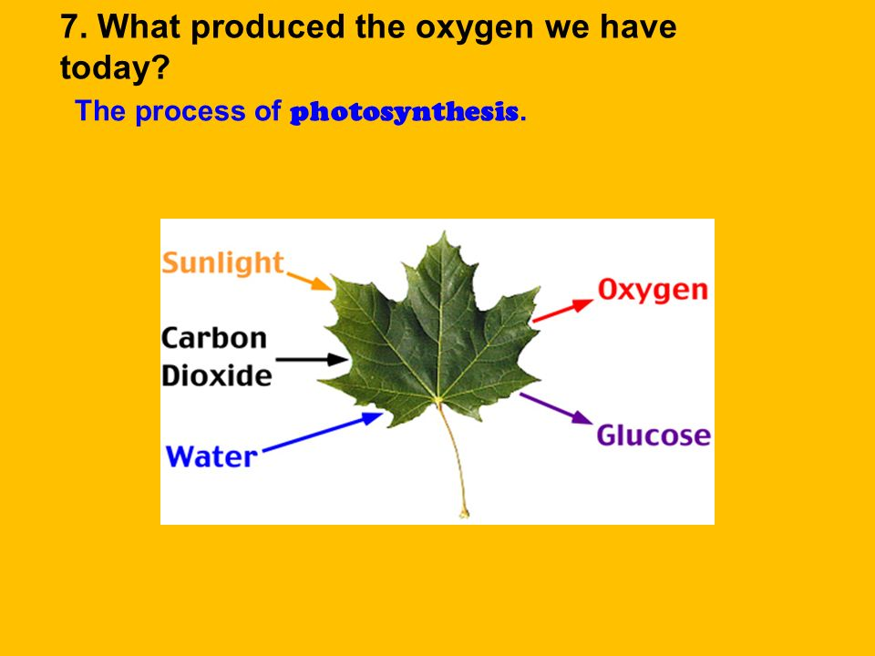 7. What produced the oxygen we have today