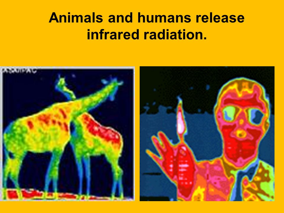 Animals and humans release infrared radiation.