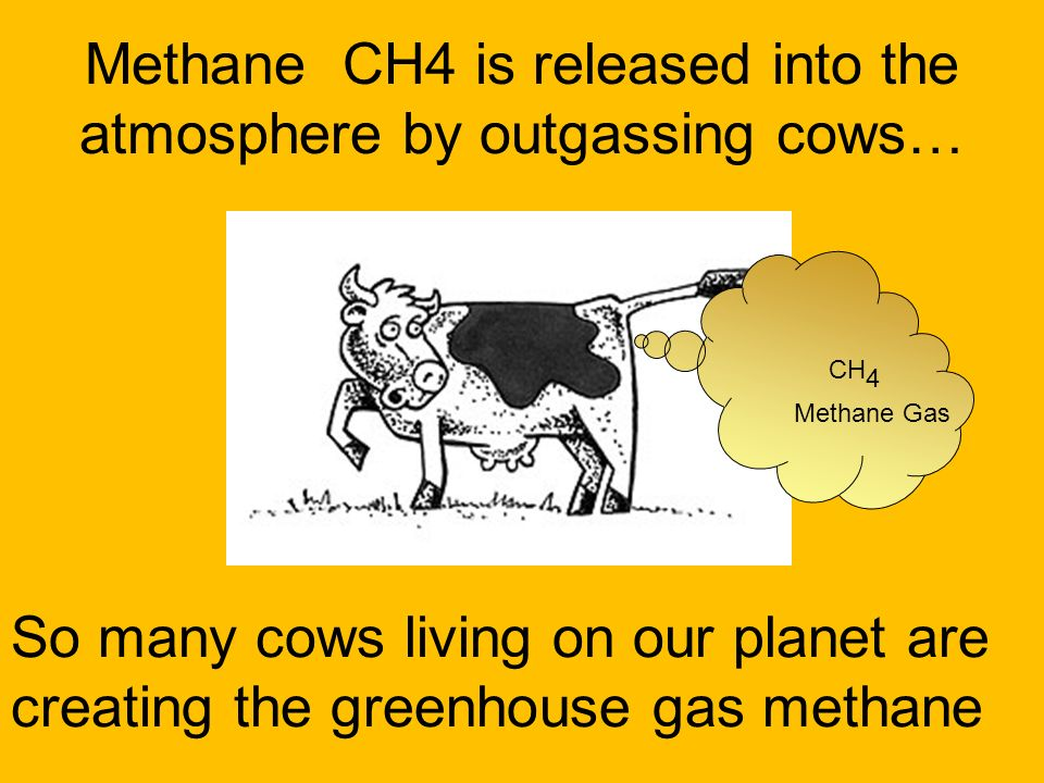 Methane CH4 is released into the atmosphere by outgassing cows…