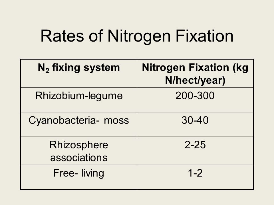 Rates of Nitrogen Fixation