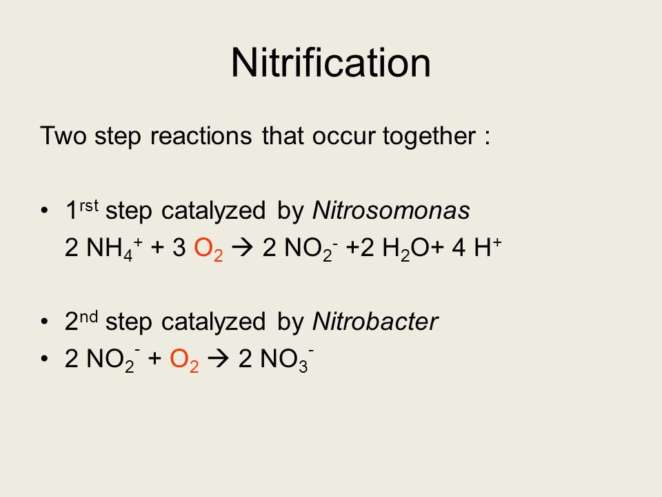 Nitrification Two step reactions that occur together :