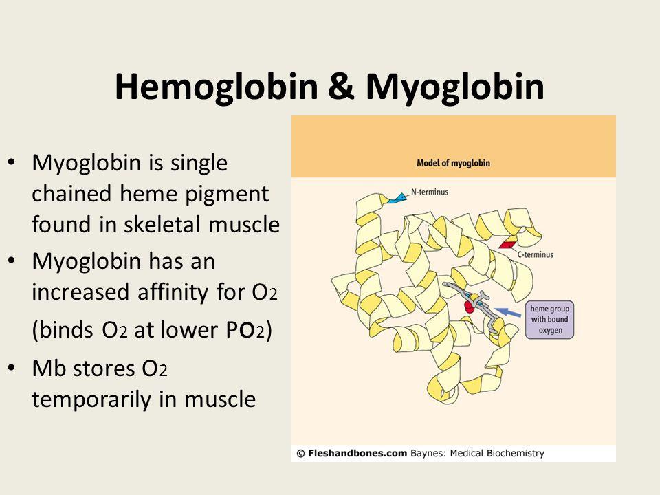 Hemoglobin & Myoglobin