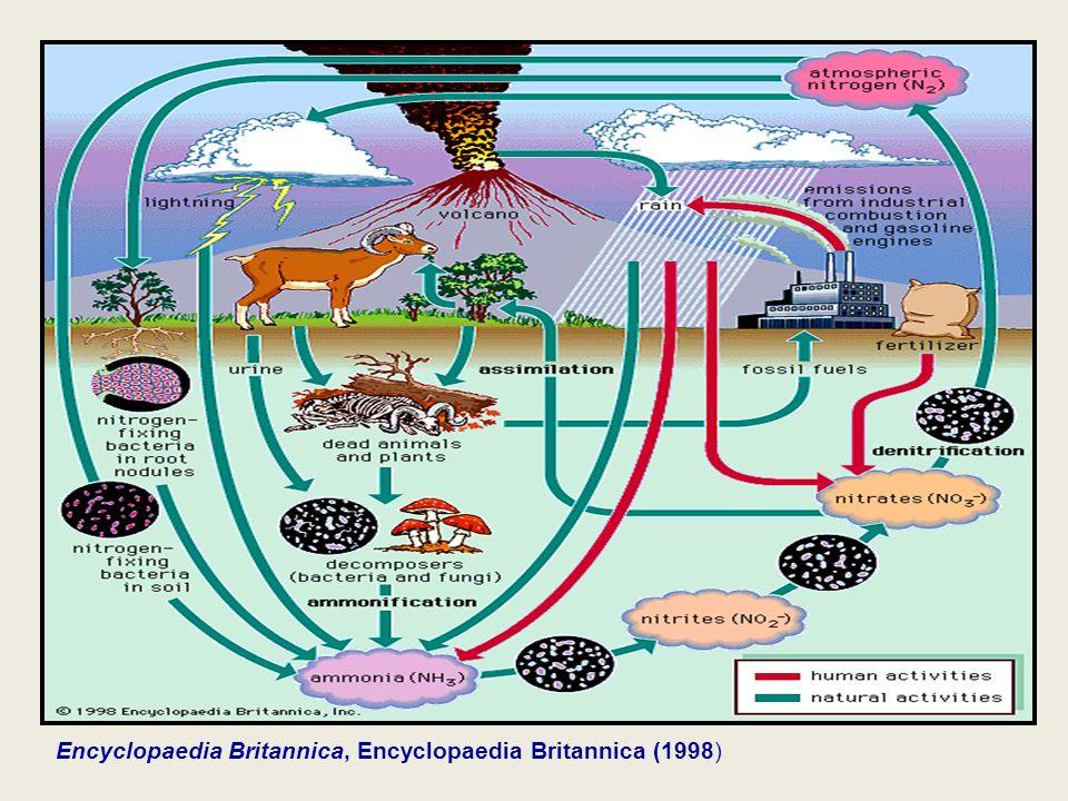 Encyclopaedia Britannica, Encyclopaedia Britannica (1998)