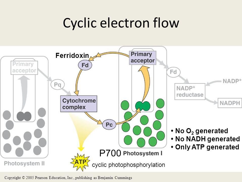Cyclic electron flow P700 Ferridoxin • No O2 generated