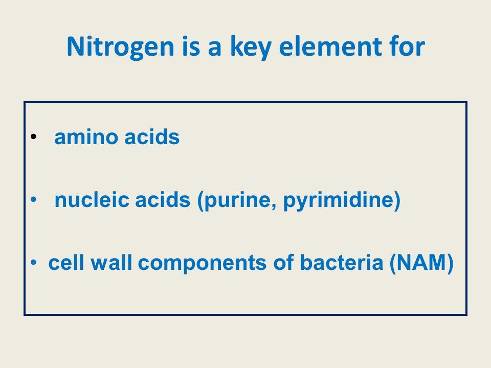 Nitrogen is a key element for