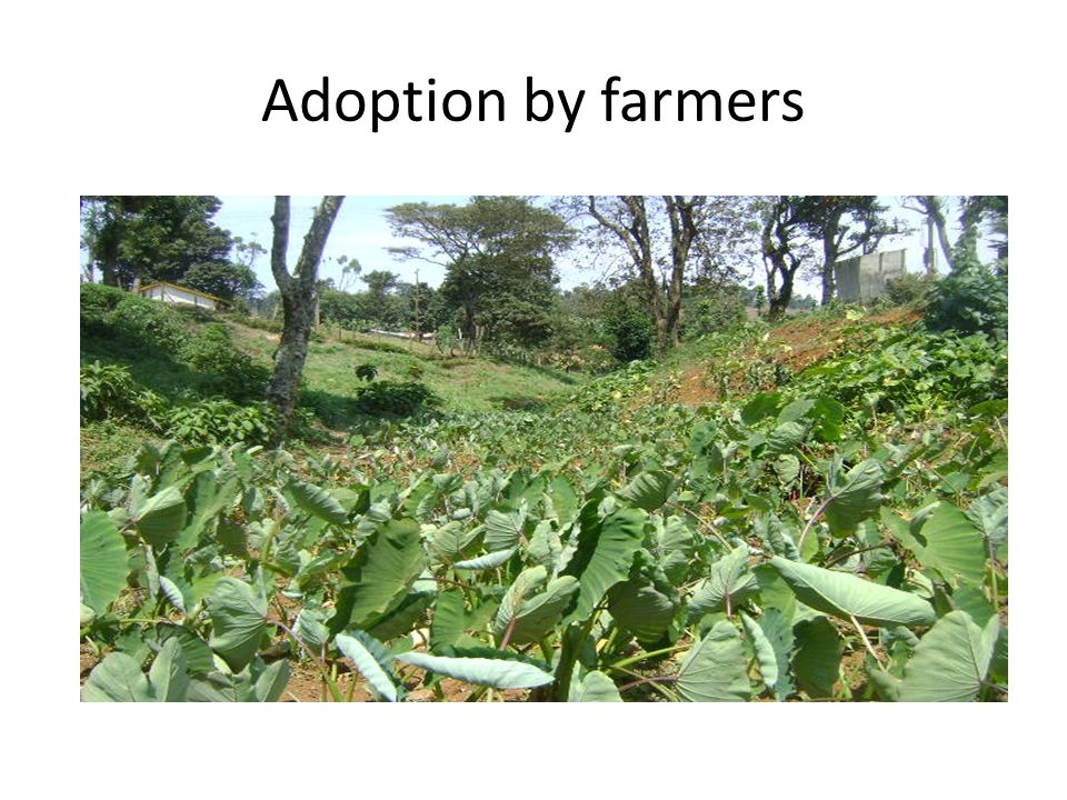 Adoption by farmers