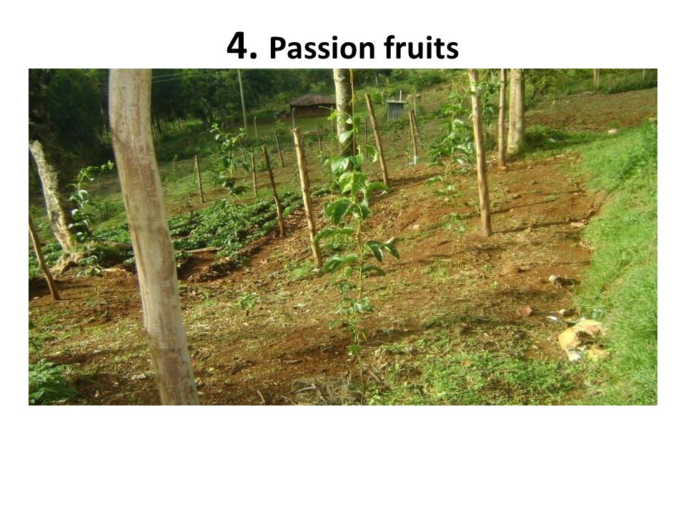 4. Passion fruits
