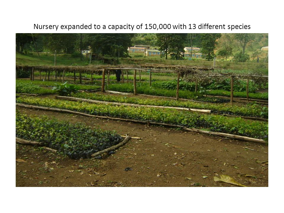 Nursery expanded to a capacity of 150,000 with 13 different species