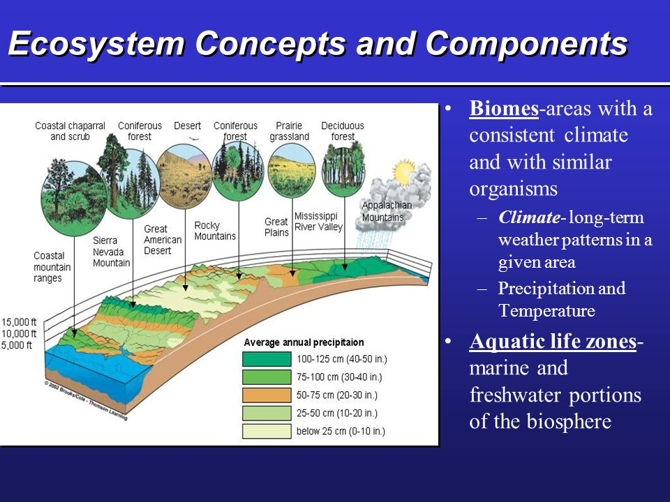 Ecosystem Concepts and Components