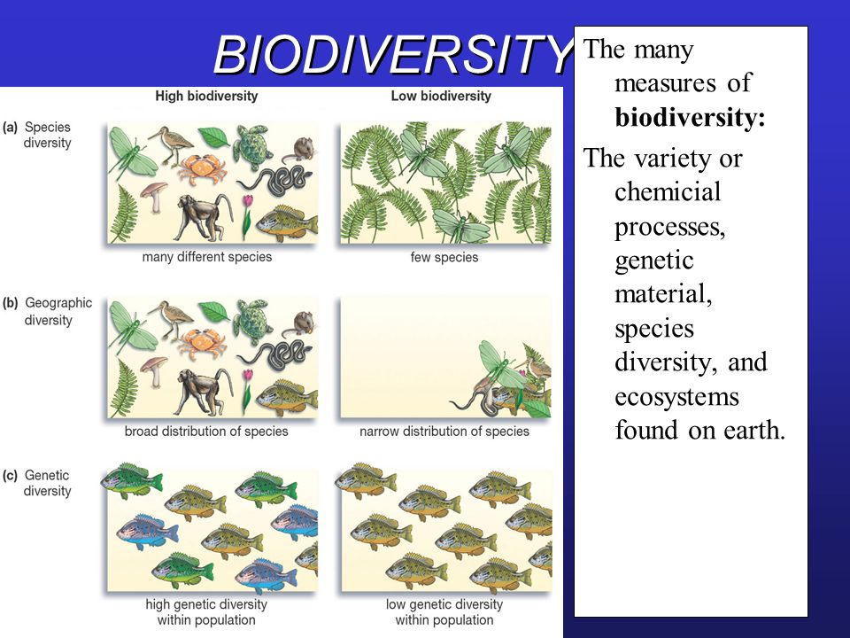 BIODIVERSITY The many measures of biodiversity: