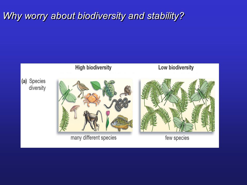 Why worry about biodiversity and stability
