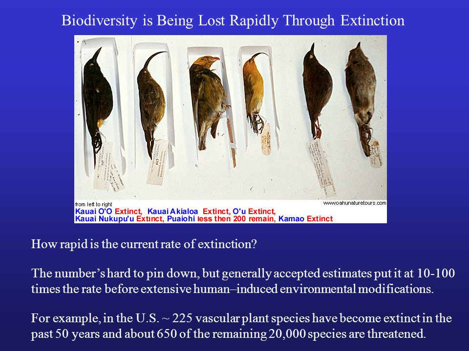 Biodiversity is Being Lost Rapidly Through Extinction