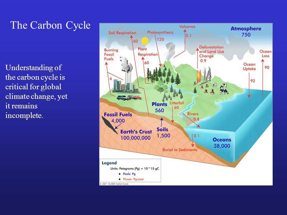 The Carbon Cycle Understanding of the carbon cycle is critical for global climate change, yet it remains incomplete.