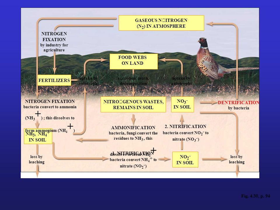Nitrogen Cycle (atmospheric cycle)