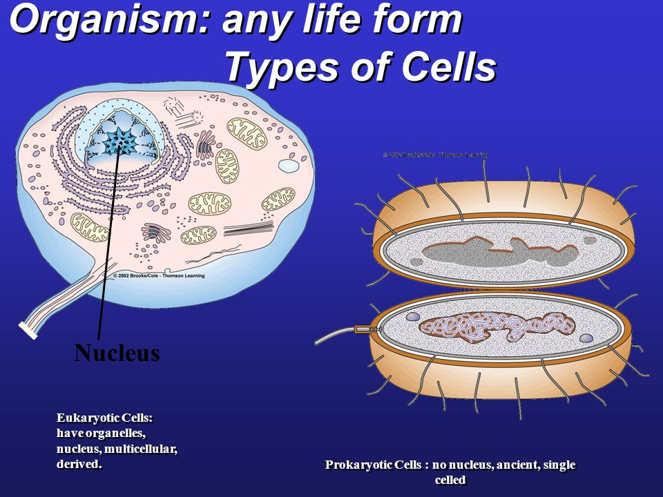 Organism: any life form Types of Cells