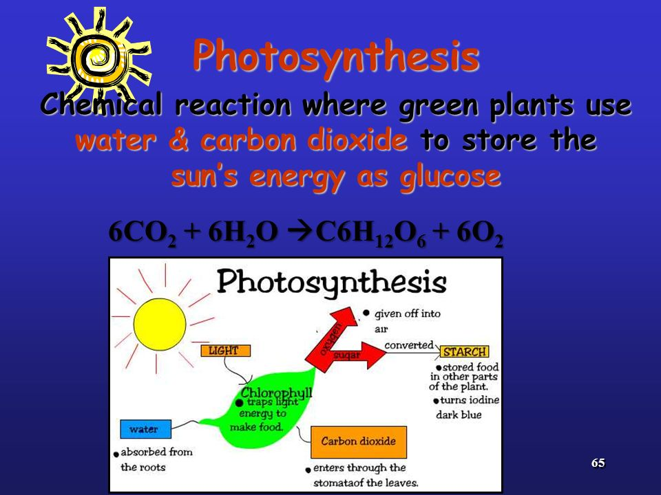 Photosynthesis Chemical reaction where green plants use water & carbon dioxide to store the sun's energy as glucose.