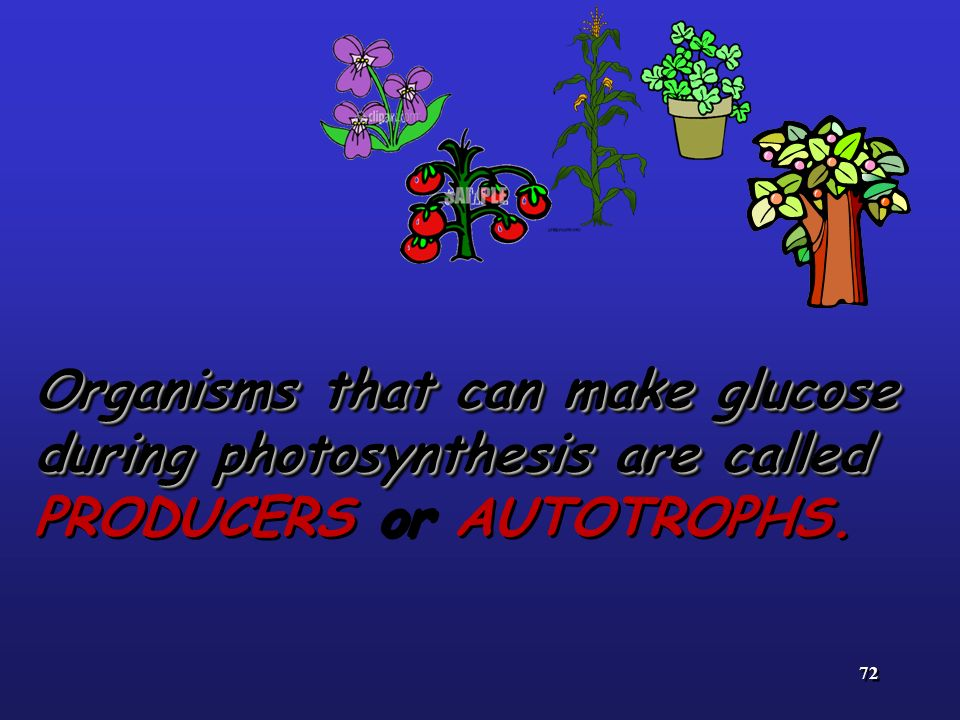 Organisms that can make glucose during photosynthesis are called PRODUCERS or AUTOTROPHS.