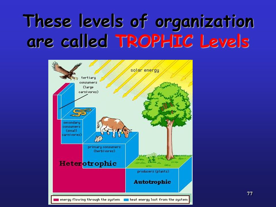 These levels of organization are called TROPHIC Levels