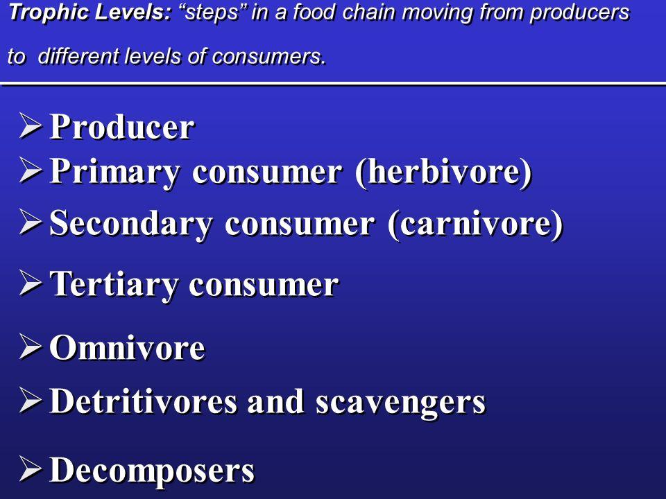 Primary consumer (herbivore)