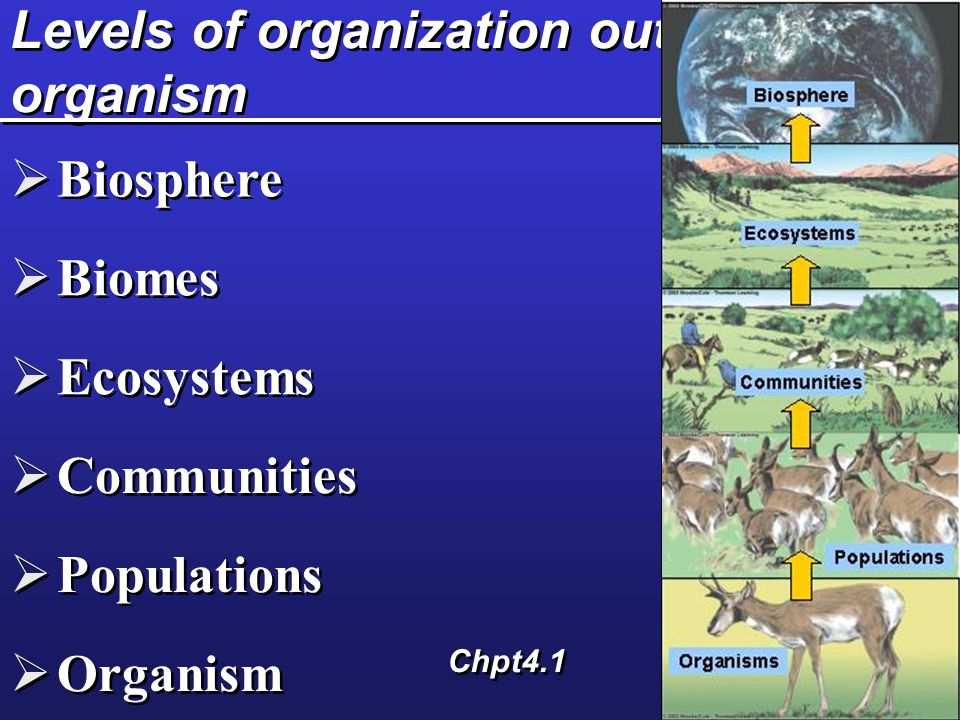 Levels of organization out of organism