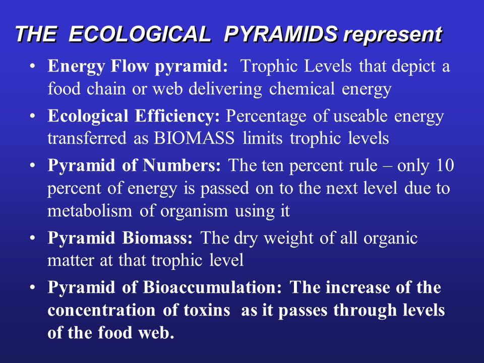 THE ECOLOGICAL PYRAMIDS represent