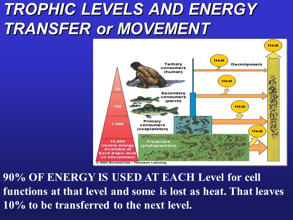 TROPHIC LEVELS AND ENERGY TRANSFER or MOVEMENT