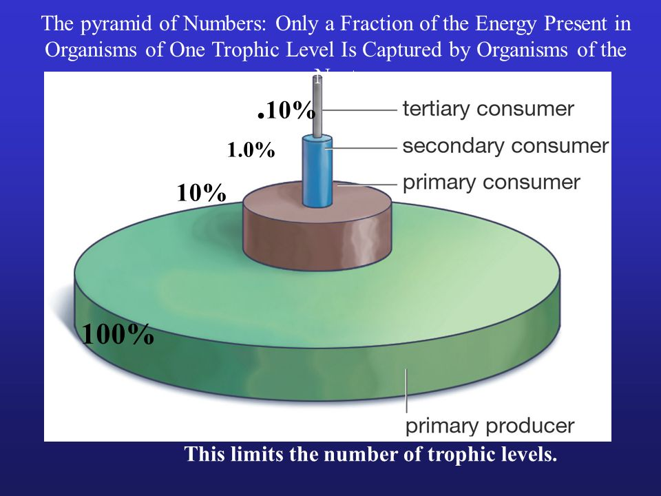 The pyramid of Numbers: Only a Fraction of the Energy Present in Organisms of One Trophic Level Is Captured by Organisms of the Next