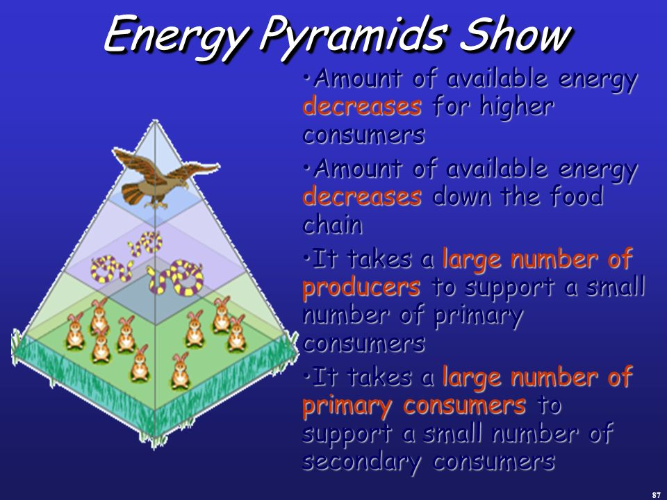Energy Pyramids Show Amount of available energy decreases for higher consumers. Amount of available energy decreases down the food chain.