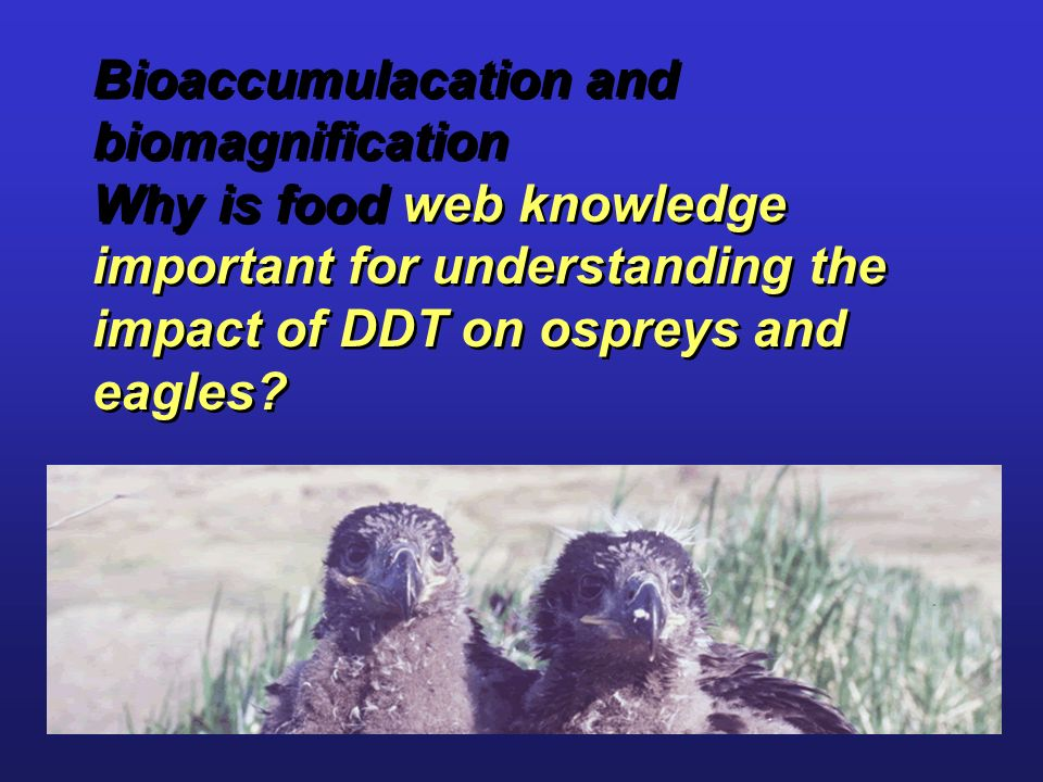 Bioaccumulacation and biomagnification Why is food web knowledge important for understanding the impact of DDT on ospreys and eagles