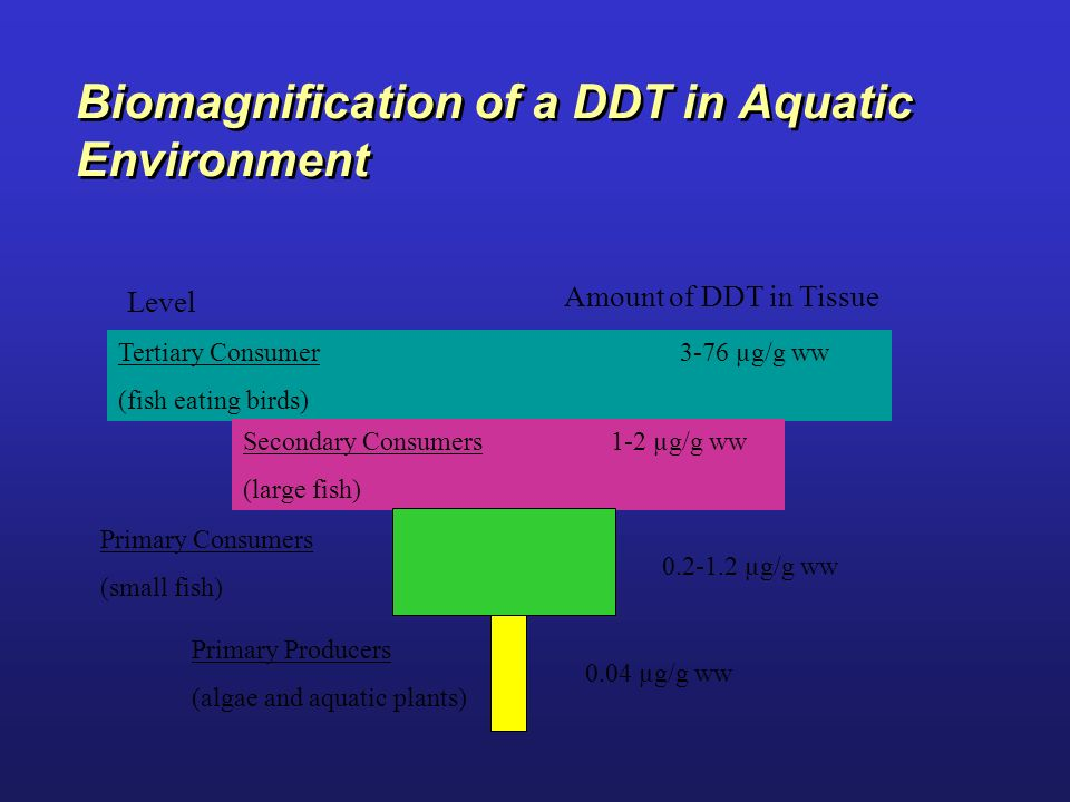 Biomagnification of a DDT in Aquatic Environment